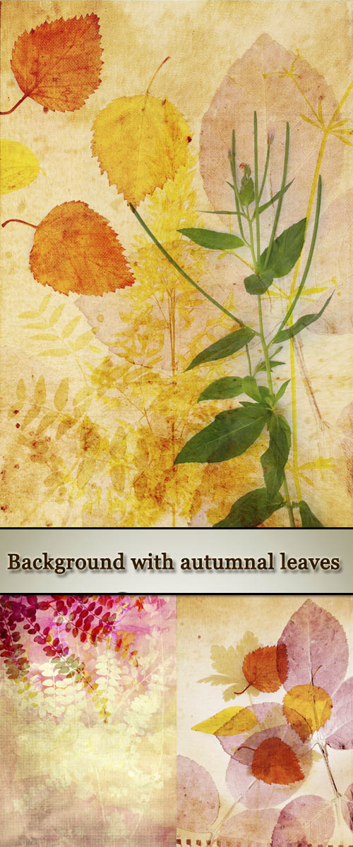 Stock Photo: Beautiful vintage background with autumnal leaves