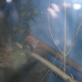 Zoo Snooze 2015 - IMG_7202.JPG
