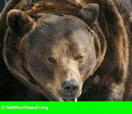Hình 1: Một người phụ nữ bị gấu tấn công và chôn sống