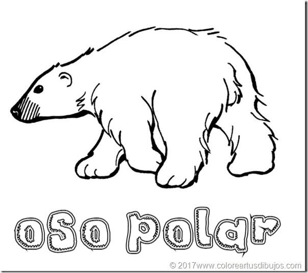 osos polar  (1)