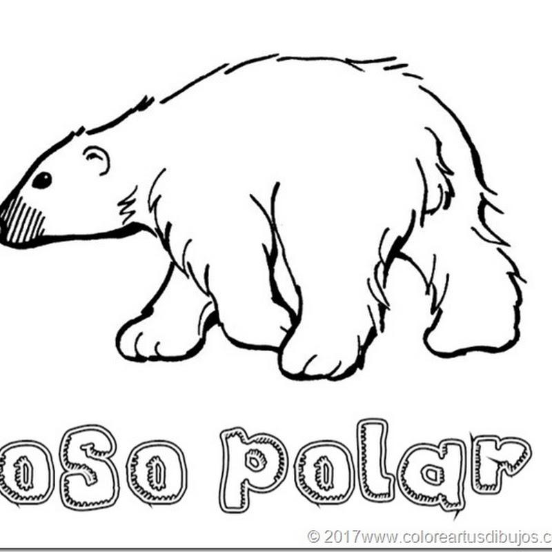 Oso polar Dibujos para colorear y pintar