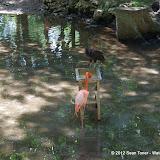 04-07-12 Homosassa Springs State Park - IMGP0052.JPG