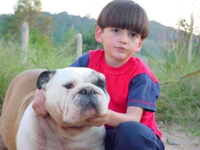 Bulldog Inglês Coloridos Cores Raras Usa Brasil Bulldogge Petclube