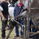 boerendag_alphen-2015-115.jpg