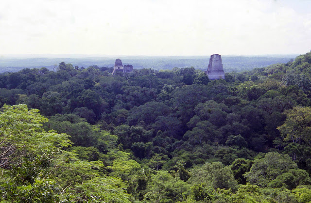 La Forêt ombrophile à Tikal (Petén, Guatemala), août 2000. Photo : J.-M. Gayman