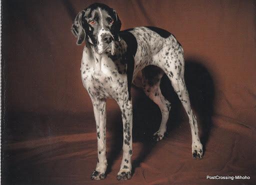 Beautiful DOGS (12).jpg