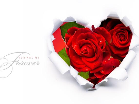 Valentinovo besplatne ljubavne slike čestitke pozadine za desktop 1152x864 free download Valentines day 14 veljača cvijeće ruže