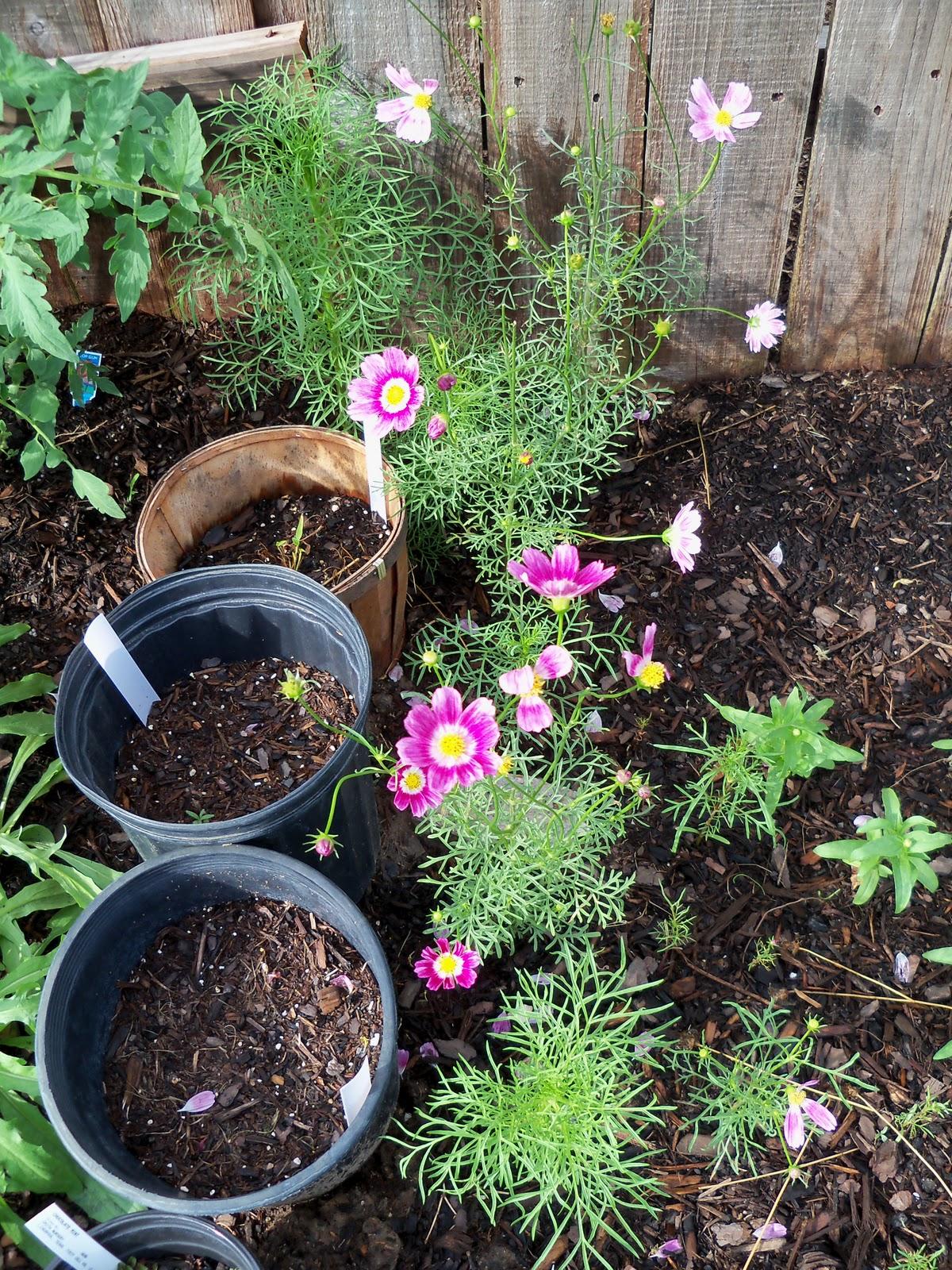 Gardening 2010, Part Two - 101_2240.JPG