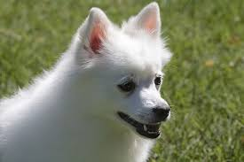 개가 육구를 핥는 이유. 이상시의 대처 방법과 관리 방법