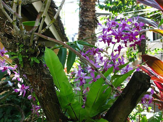 Из зимы в лето. Филиппины 2011 - Страница 7 IMG_0036%252520%2525285%252529