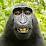 Paul Strand's profile photo