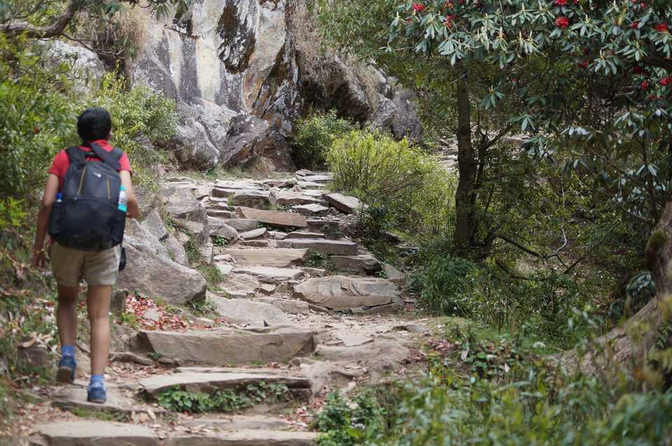 triund-trek-guide_image