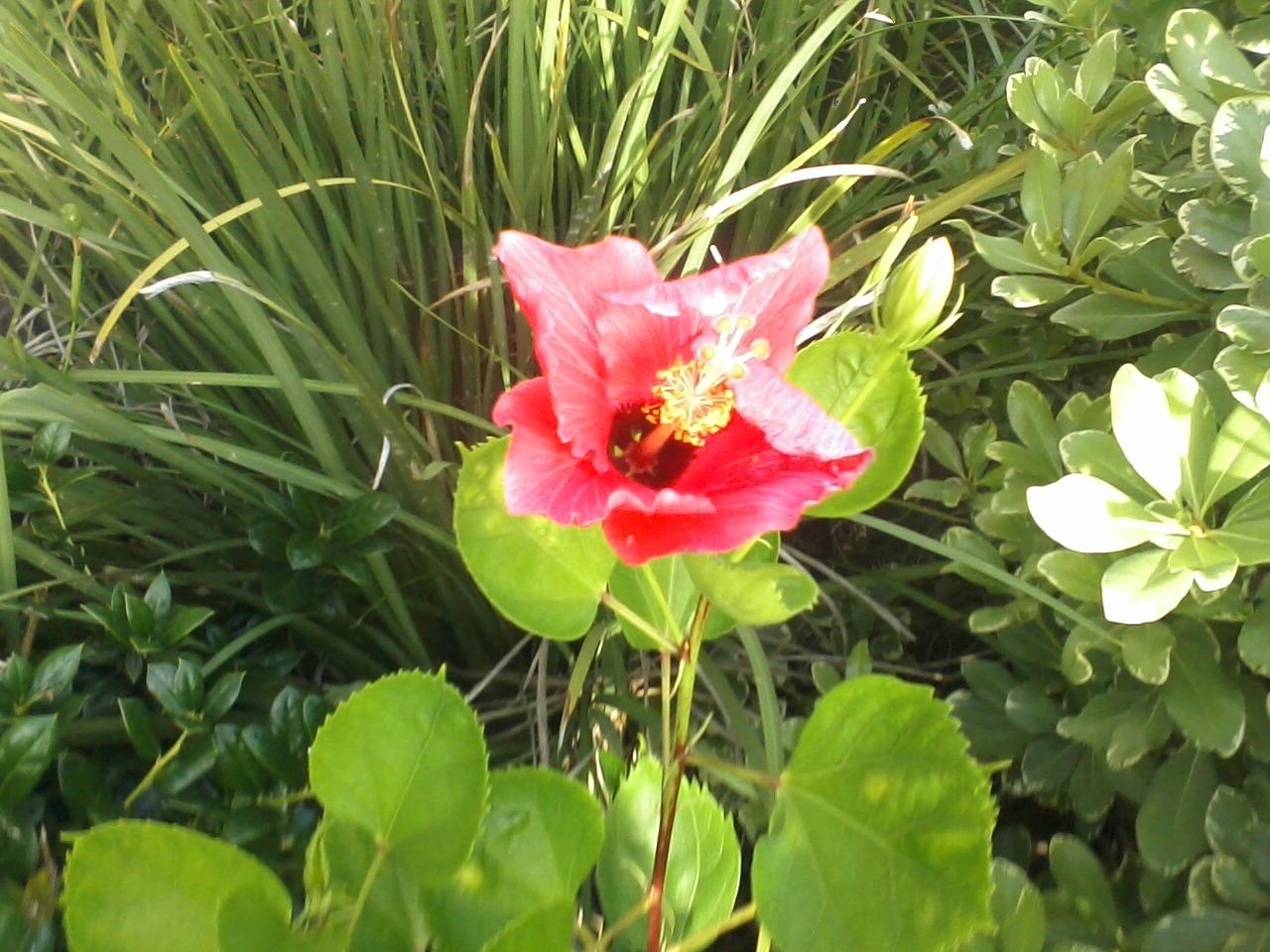 Gardening 2015 - 0629185520.jpg