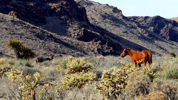 Wild horses near Wild Horse Canyon