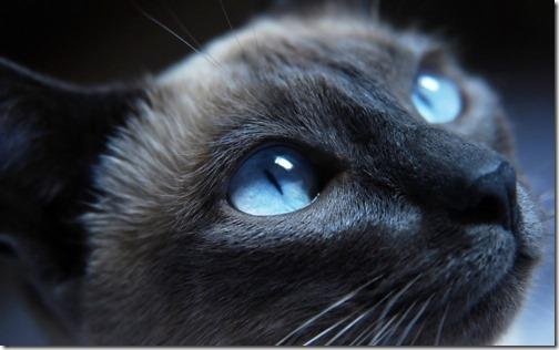 22 fotos de gats (40)