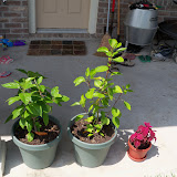 Gardening 2010, Part Three - 101_5144.JPG