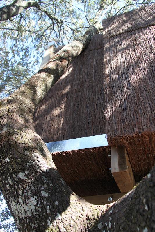 La casa en el árbol enraizada.