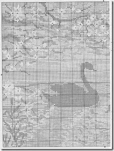 cisnes negros -puesta-sol-1 (1)