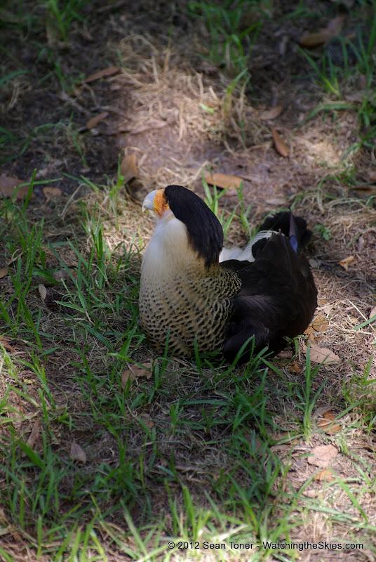 04-07-12 Homosassa Springs State Park - IMGP4579.JPG
