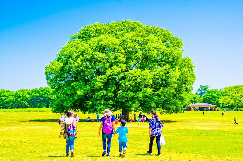Showa Kinen Park zelkova photo