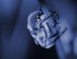 scene,macrophoto,insect,