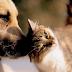 Polícia investiga se mortes de cães e gatos em cidade da PB ocorreram por envenenamento