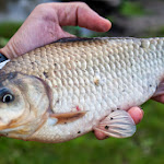 20140705_Fishing_Prylbychi_057.jpg