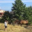 educazione con i cavalli.jpg