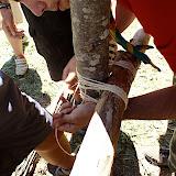 Campaments dEstiu 2010 a la Mola dAmunt - campamentsestiu059.jpg