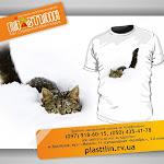 Cat&snow_.jpg