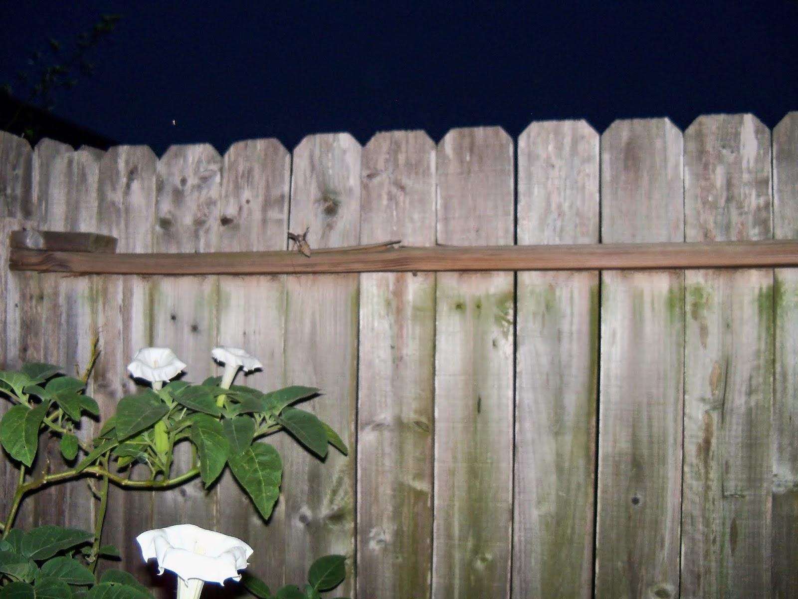 Gardening 2014 - 116_3606.JPG