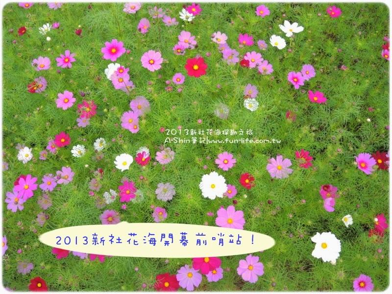 2013新社花海節探勘之旅~看樣子要去新社花海必須抓好時間!