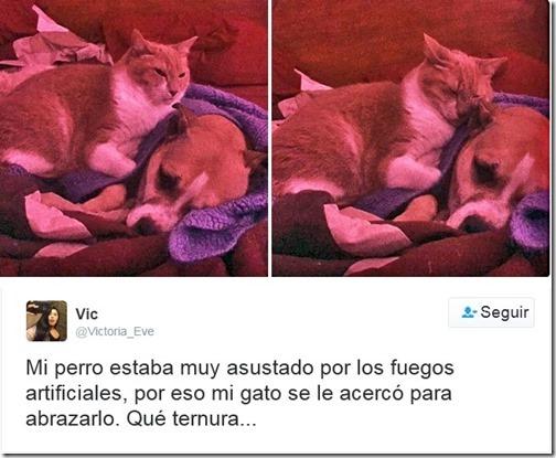 humor twits de gatos (11)