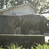 ありし日のゾウのウメ子