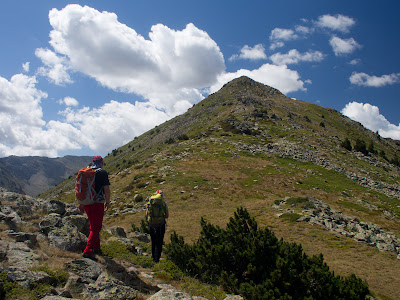 Quan s'acaba el bosc avancem per prat alpí fins al Pic de l'Orri