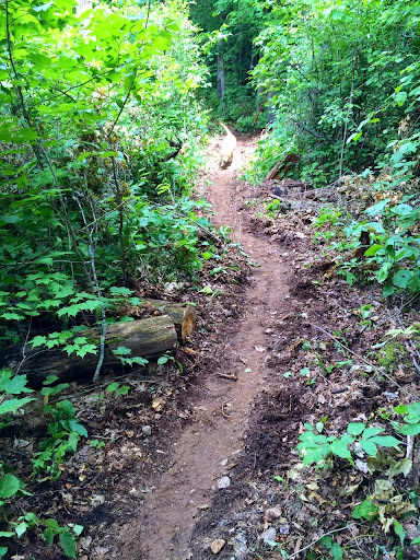 Hudson checking out the new singletrack