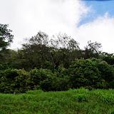 06-18-13 Waikiki, Coconut Island, Kaneohe Bay - IMGP6948.JPG