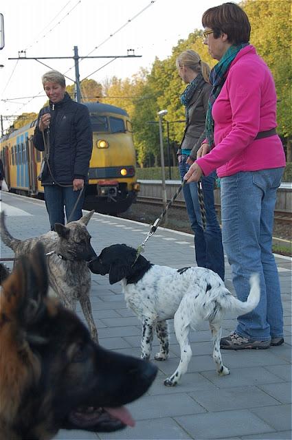 KNON pups in de stad 09-2011 - DSC_0050.JPG