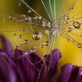 by Lidy Kerr - Nature Up Close Natural Waterdrops