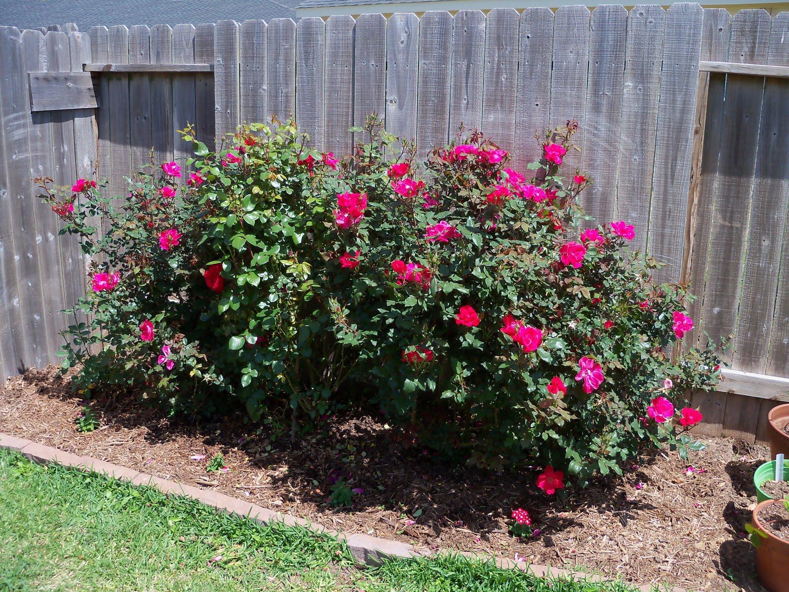 Gardening 2010 - 101_0591.JPG