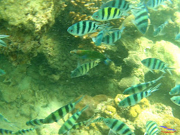 family trip pulau pari 140716 GoPro 23