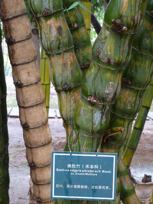 Chine .Yunnan . Lac au sud de Kunming ,Jinghong xishangbanna,+ grand jardin botanique, de Chine +j - Picture1%2B675.jpg