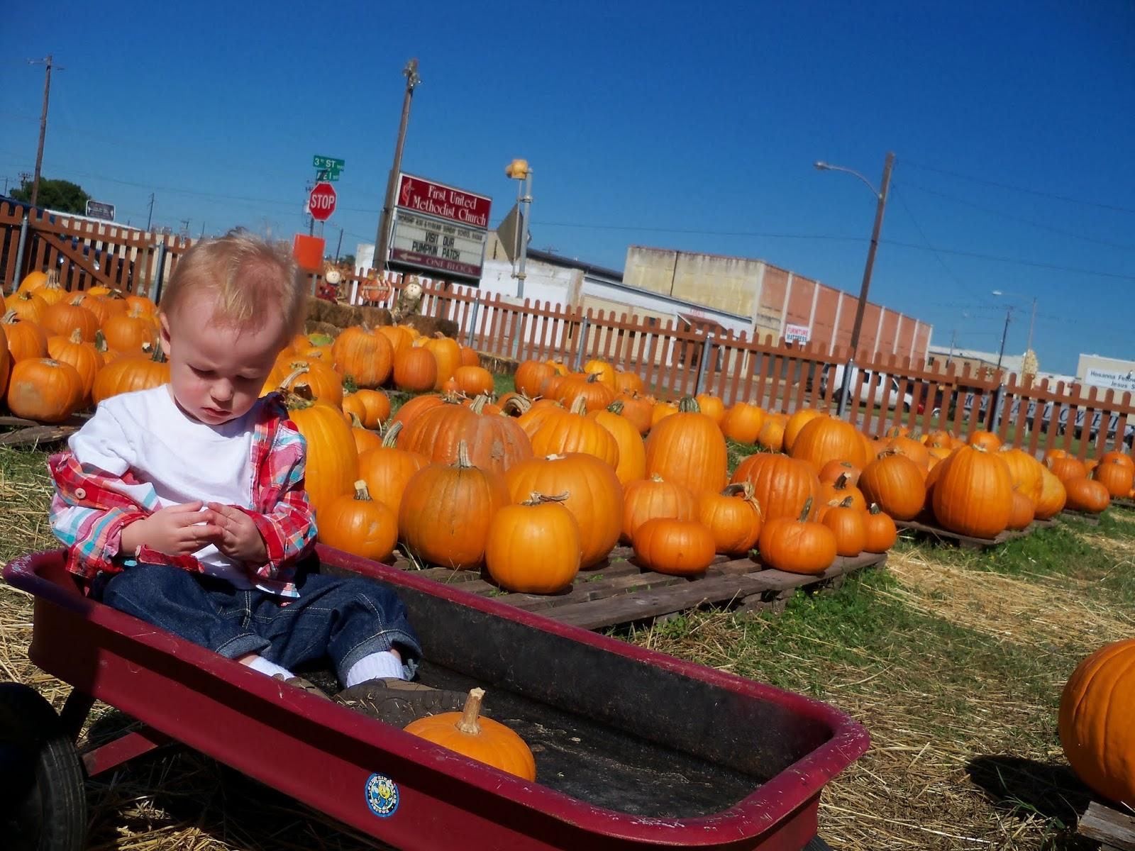 Pumpkin Patch - 115_8258.JPG