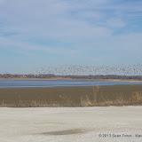 01-19-13 Hagerman Wildlife Preserve and Denison Dam - IMGP4103.JPG