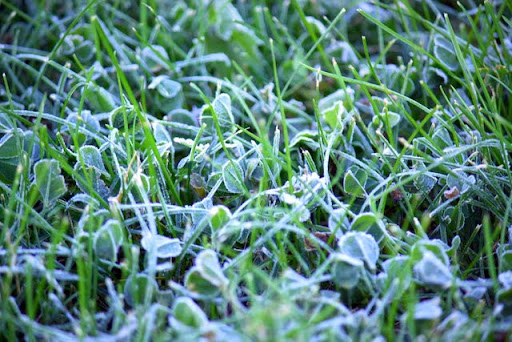 Grass touched by frost Wednesday morning