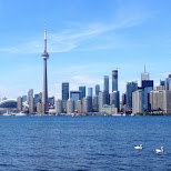 day dreaming of the Toronto skyline in Toronto, Ontario, Canada