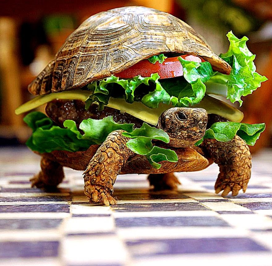 Funny 3D Animal Turtle Wallpapers Hd
