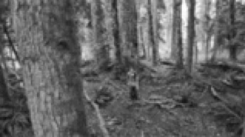 Twilight Path Ritual Earth Burial