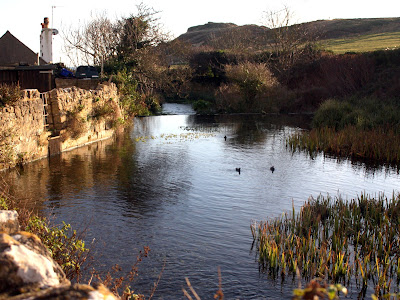 Pond in Lulworth