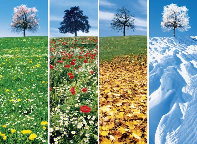 Do đâu mà 1 năm phân thành 4 mùa?